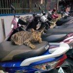 【日本とぜんぜん違う】バイク大国「台湾」のバイク文化を感じた!