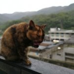 「猴硐猫村」がその名の通り猫だらけ!犬はふてくされる