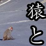 台湾猿と塩顔大仏のお寺